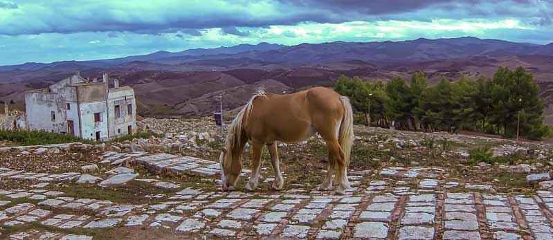 horse craco basilicata