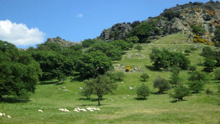 sardinia countryside photo