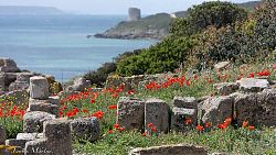 sardinia spring photo