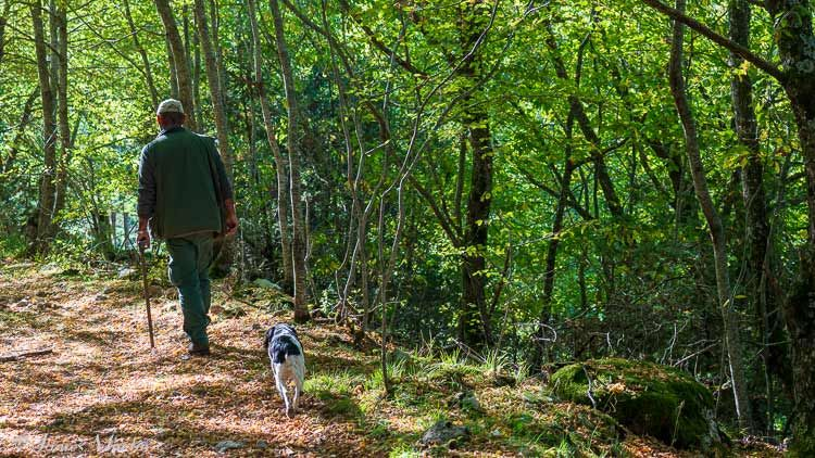 truffle hunter and dog